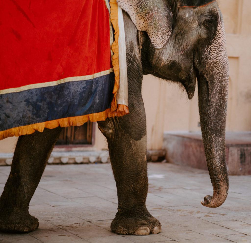 olifant circus